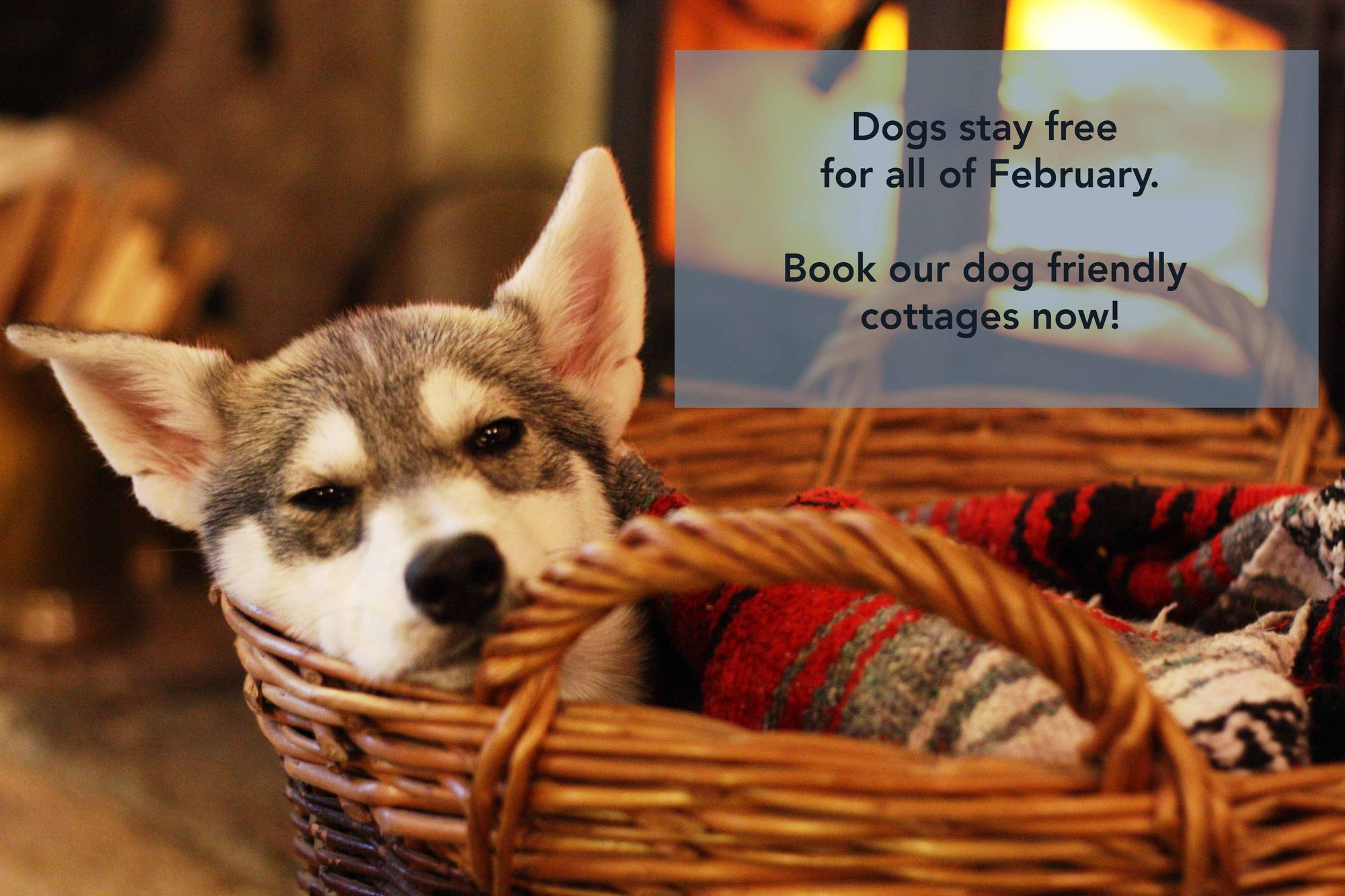 February dogs stay free