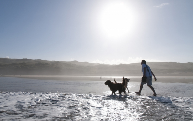 Dog Walker, Cornwall - Matt Jessop