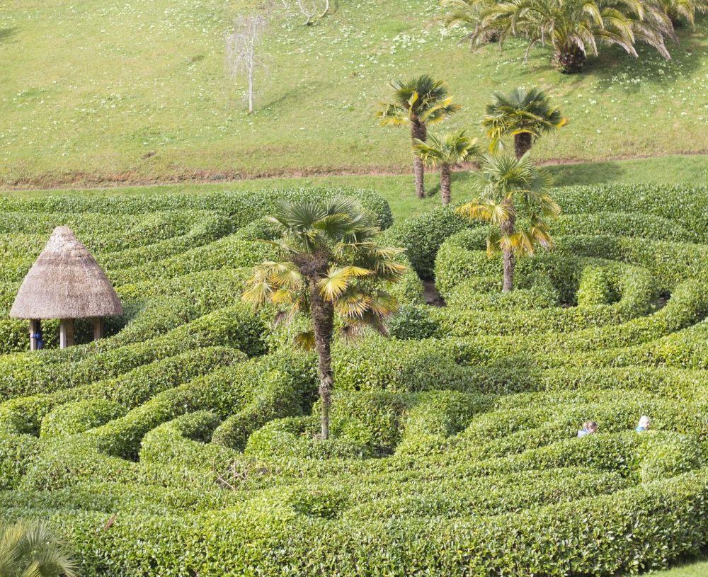 Glendurgan Maze - Mandy Feldon Photography