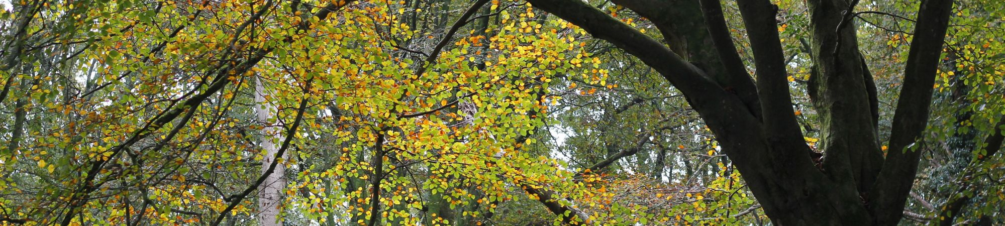 Crenver Woods - Autumn in Cornwall
