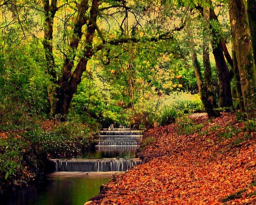 Tehidy Country Park, Cornwall